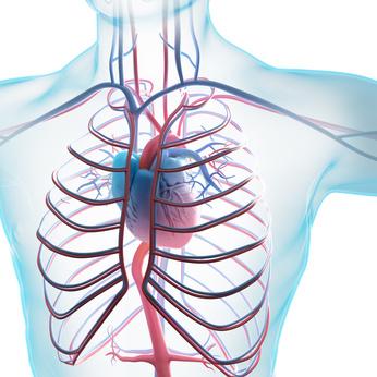 Schlaganfall- und Herzinfarkt - Risiko bei Gürtelrose